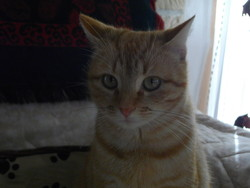 Pirrouette, chat Gouttière