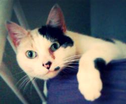 Pistache, chat