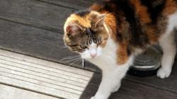 Pistache, chat Gouttière