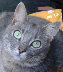 Piston, chat Gouttière