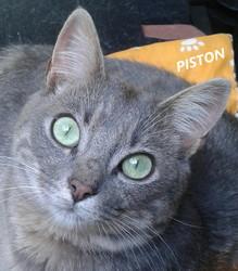Piston, chat Gouttière