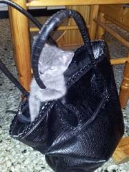 Pitch, chat Gouttière