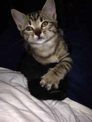 Sita, chat Gouttière