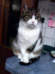 Pitchounette, chat Gouttière
