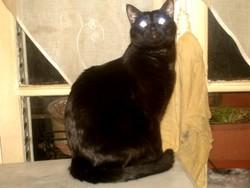 Piu-Piu, chat Gouttière