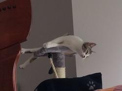 Pivoine, chat Gouttière