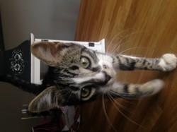 Pixel, chaton Gouttière