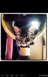 Pixel, chat Gouttière