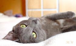 Pixelle, chat Gouttière