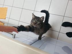 Pixelle, chat