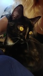 Pixie, rongeur