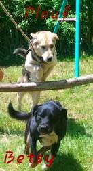 Plouf Et Besty, chien