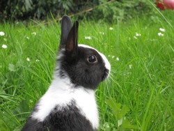 Plume, rongeur Lapin