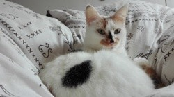 Plume, chat