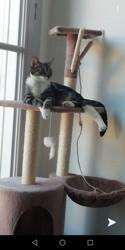 Plume, chaton