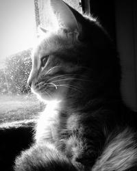 Plumette, chat Gouttière