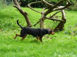 Pluto, chien
