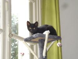Podpai, chat Gouttière