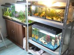 Fishroom, autres