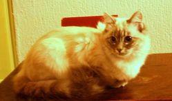 Poivre, chat Gouttière