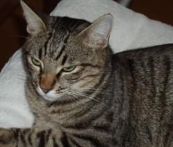 Poket, chat Gouttière