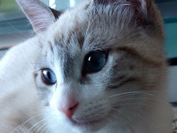 Polaine, chat Gouttière