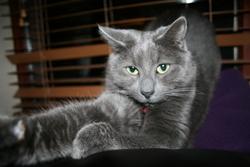 Poliakov, chat