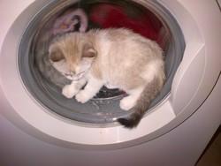 Polie, chat Gouttière