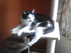 Pollux, chat