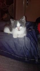 Zelda, chaton