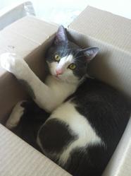 Pompom, chat Gouttière