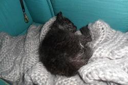 Pompounet, chat Gouttière