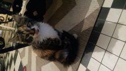 Ponky, chat Gouttière