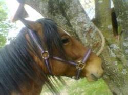 Pony, autres