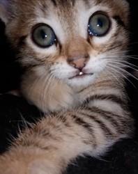 Potiron, chat Gouttière
