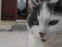 Pouet, chat
