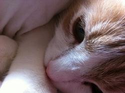 Pouki, chat Gouttière