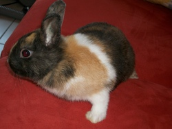 Pouky, rongeur Lapin