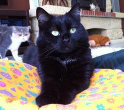 Poupée  'L'Amoureuse De Simba', chat Gouttière