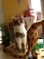 Poupette Clochette, chat