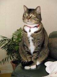 Poupie, chat Gouttière