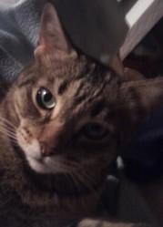 Poupounet, chat Gouttière