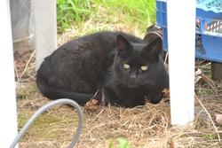 Pousky, chat Gouttière