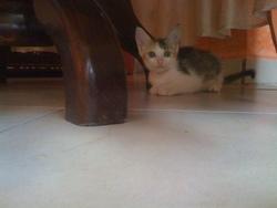 Poussi, chat