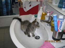 Poussinette, chat Gouttière