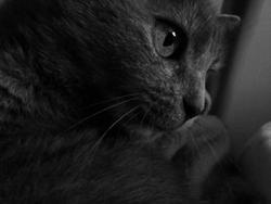 Poussinette, chat