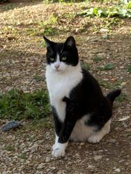 Poussy, chat Gouttière
