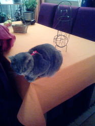 Poussy, chat