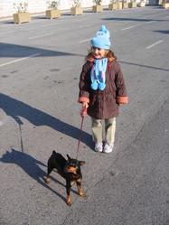 Praline, chien Pinscher