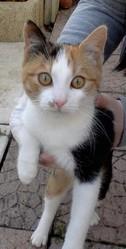 Praline, chat Gouttière